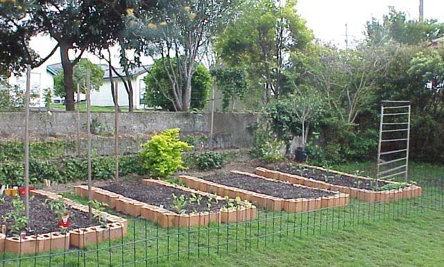Home Gardening Questions for Beginners