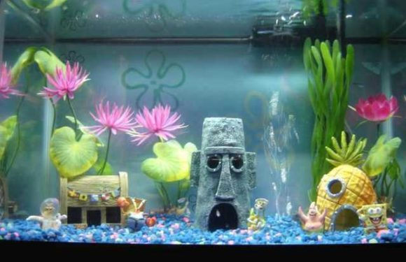 Fish Tank Set Up – The Easy Way